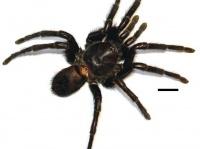 画像は、カンクワモ・マルケッジ 「Wikipedia」より引用