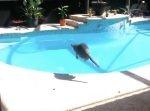 プールを覗き込んでいた猫が突然ダイブ! 一体なぜ!?