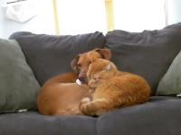 飼い主がいないと寂しくて・・・分離不安症だった犬にぴったり寄り添い、慰めてくれていたのは猫だった