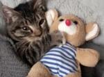 まるで人間の子供みたい!?くまの人形を抱えて寝る猫ちゃんが可愛すぎる…!