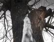 木の中からドクドクと水が湧き出る!まるで井戸のような桑の木(モンテネグロ)