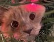 ツリーを飾って一週間…愛猫がついにツリーに侵入したようだ。ツリーと一体化した猫への海外の反応