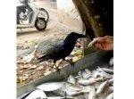 頭良いな! より大きな魚をもらうべく、魚屋さんと交渉するカラス。