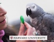 天才ヨウム、記憶テストで名門大学の学生を上回る成績を出す(米研究)
