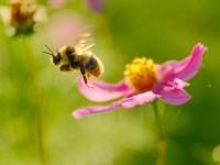 花と虫は騙し合う!その不思議で奥深い関係とは?(*画像はイメージです)