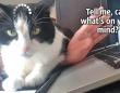 猫あるある?「現在読み込み中」で動きが止まってしまう件について
