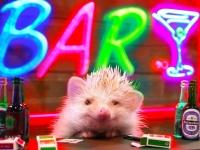 ハリネズミを鑑賞しながらお酒が楽しめるナイトスポット「ハリネズミBAR」が渋谷に登場