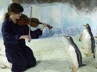 ヴァイオリニストとペンギン