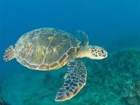 1時間におよぶ人工呼吸でペットの亀の命を救う!