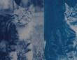 120年前のタイムカプセルに愛猫の写真のネガが!当時の少女の想いが現像と共に蘇る(フランス)