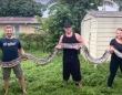 全長約6メートル、巨大なビルマニシキヘビを捕獲。フロリダ州の最高記録更新(アメリカ)