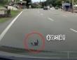 道路に飛び出した子猫が突然消えるというミステリー。だがその猫はマジシャンさながらの芸当で瞬間移動していた!