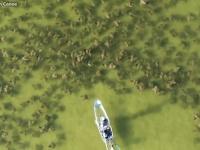経験したい!透明のボートにのってエイの大群に遭遇するという海ロマン!(アメリカ)