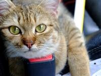 アメリカで人気のある猫の名前は?2019年ランキングが発表、そして日本は?