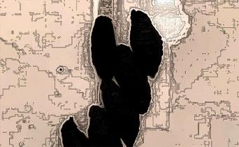 これはいったい!?民家の浴室の壁についたうんちっちめいた茶色い物体の正体は?(オーストラリア)