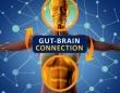 腸と脳をつなぐミッシングリングを発見か?腸に神経伝達物質の存在が示唆される(米研究)