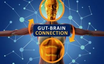 腸と脳をつなぐミッシングリンクを発見か?腸に神経伝達物質の存在が示唆される(米研究)