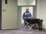 飼い主がピンチの時に犬たちは助けてくれるのか?を検証してみた。