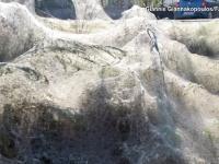 ギリシャの町でクモが大量繁殖!巣が海岸沿いを覆い尽くす