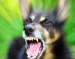 犬は「怖がっている人間」に噛みつく?(depositphotos.com)