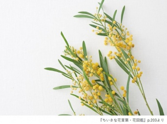 『ちいさな花言葉・花図鑑』(ユーキャン刊)p.203より「ミモザ」