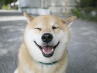 ○○のにおいはお風呂のサイン?柴犬まる、衣替えでこんなにすっきり!