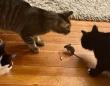まじかよ。猫3匹がネズミを取り囲むも、肉球ひとつ出ない雰囲気の様子