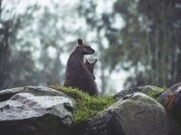 わずか50年で地球の野生生物は3分の2以下に激減していたことが判明(WWF環境報告書)