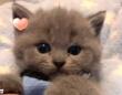 みんないい夢が見られますように…!とろけそうな子猫にうっとろりんと癒される動画