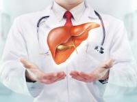 非アルコール性脂肪性肝疾患の患者が10年間で約3倍に(shutterstock.com)