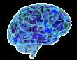 アメリカとカナダの国境で「人間の脳」が押収される