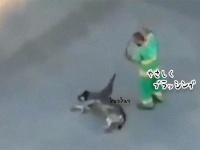 野良犬の体をやさしくブラッシングするのが日課の清掃員