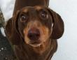 犬、喜び過ぎた。飼い主が自宅待機、うれしすぎて尻尾降りすぎて負傷したらしい犬が発見された