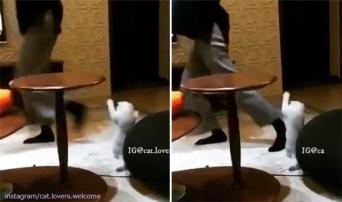 何?エクササイズ?うちもやる!飼い主が踊っている後ろで猫も一緒に踊りだずの構図
