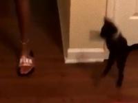 壁の向こうから何か来たので狩るっ!びっくりどっきりジャンプを見せた黒小猫