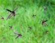 O型は血を吸われやすいは本当だった。なぜ蚊に刺されやすい人と刺されにくい人がいるのか?8つの科学的理由