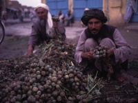 戦闘が激化するアフガニスタンで「ヘロイン」が堂々と売られていた