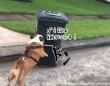 ゴミ箱は敵!ゴミ箱を見かけると体当たりして倒そうとする犬
