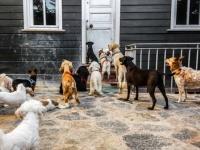 「ドイツでは正当な理由なしに犬や猫などの脊椎動物を殺すことを禁じる法律がある」に関する海外の反応