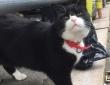 英国外務省所属の猫「パーマストン」が4年の任務を終え引退を発表