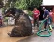 下水から巨大ネズミが出現!その正体は?(メキシコ)