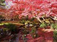 彼女と行きたい! 紅葉がきれいなおすすめ秋デートスポット5選