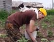 畑作業ならここから応援するし。猫によるお仕事の監視そして励ましらしきもの