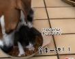 ハングリー精神に満ち溢れた元野良の子猫、犬の餌を完全占拠