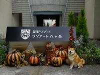 10月20日は柴犬まるの誕生日!星野リゾート リゾナーレ八ヶ岳でハロウィン体験の巻