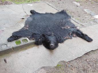 クマとリスを食べてみた