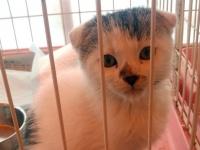※オークションで売れ残り、ペット移動販売業者にタダ同然で引き取られたネコ