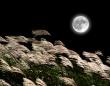 10月2日早朝に満月がやってくる!今月は満月が2回。1回目は十五夜の直後の「ハーベストムーン」