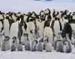 コウテイペンギンの知られざるコロニーが南極大陸で続々と発見される。うんちっちを人工衛星で追跡