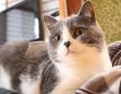 「約200語を覚えられる」人間があまり知らない猫の知能(*画像はイメージです)